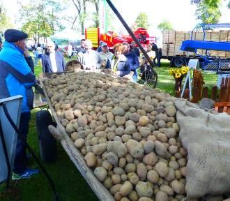 Dzień Ziemniaka w Kościerzynie 2015 [ZDJĘCIA]