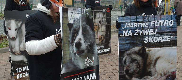 Fundacja Viva! protestowała przeciwko hodowli zwierząt futerkowych pod UMŁ [ZDJĘCIA]