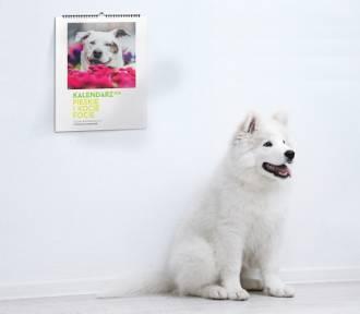Psy w roli modeli! Kalendarze dla schroniska [ZDJĘCIA, WIDEO]