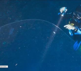 Na głębokości 22 metrów w wodzie pływała ogromna kreatura [wideo]
