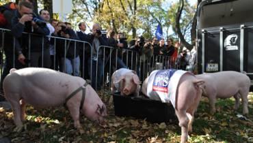 """Manifestacja Partii KORWiN, Warszawa. """"Politycy to świnie przy korycie"""" [ZDJĘCIA]"""