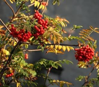 Jesień w Sieradzkiem [zdjęcia]