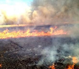 Gmina Malechowo: Spłonęło około 15 hektarów [ZDJĘCIA]
