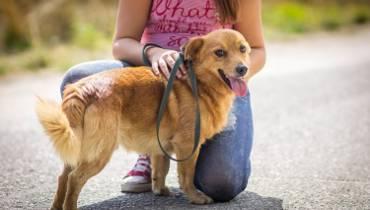Zaadoptuj psa: Przytulanki do pokochania od zaraz