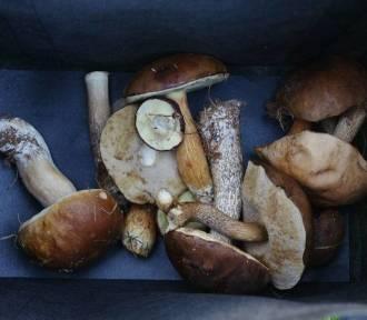 Sanepid w Kraśniku zaprasza na wystawę grzybów. Przyjdź i zobacz