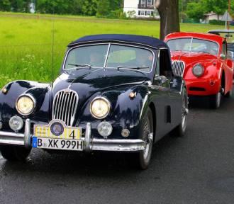 W gdańskim ZOO biją rekordy popularności. W niedzielę - pokaz starych samochodów