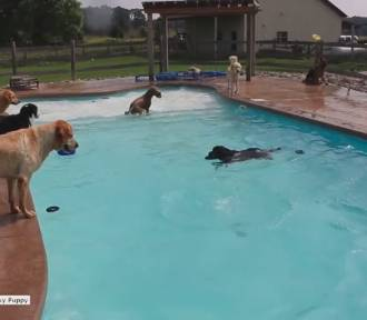Impreza tylko dla czworonogów, czyli jak bogate psy spędzają wakacje [wideo]