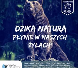 Niedźwiedź bohaterem kampanii Tatrzańskiego Parku Narodowego [WIDEO]