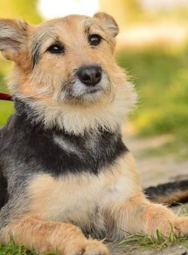 Zaadoptuj psa: Cztery piękne, czułe i pełne uroku sunie