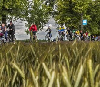 Ścieżka rowerowa Toruń - Chełmża już otwarta! [ZDJĘCIA]