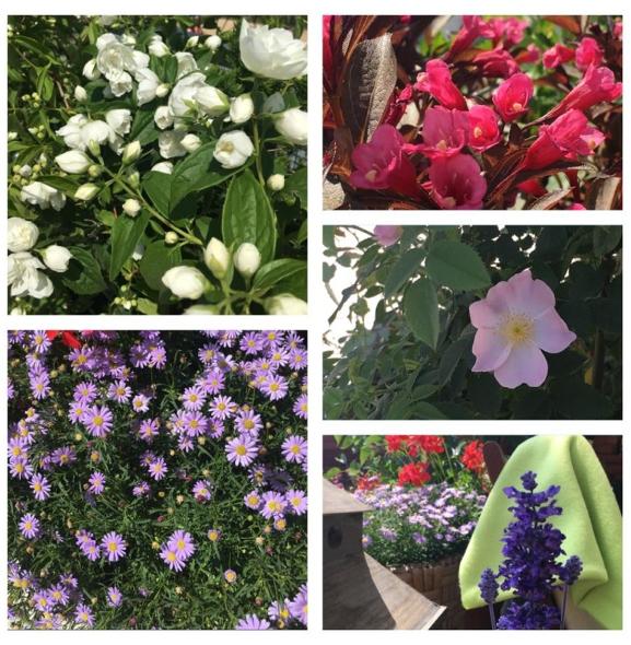 KWIATY WARSZAWY| Zobacz najpiękniejszy pokój i balkon udekorowany kwiatami!