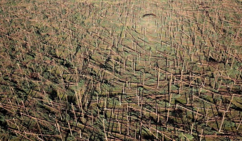 Odnowią zniszczone przez nawałnicę lasy