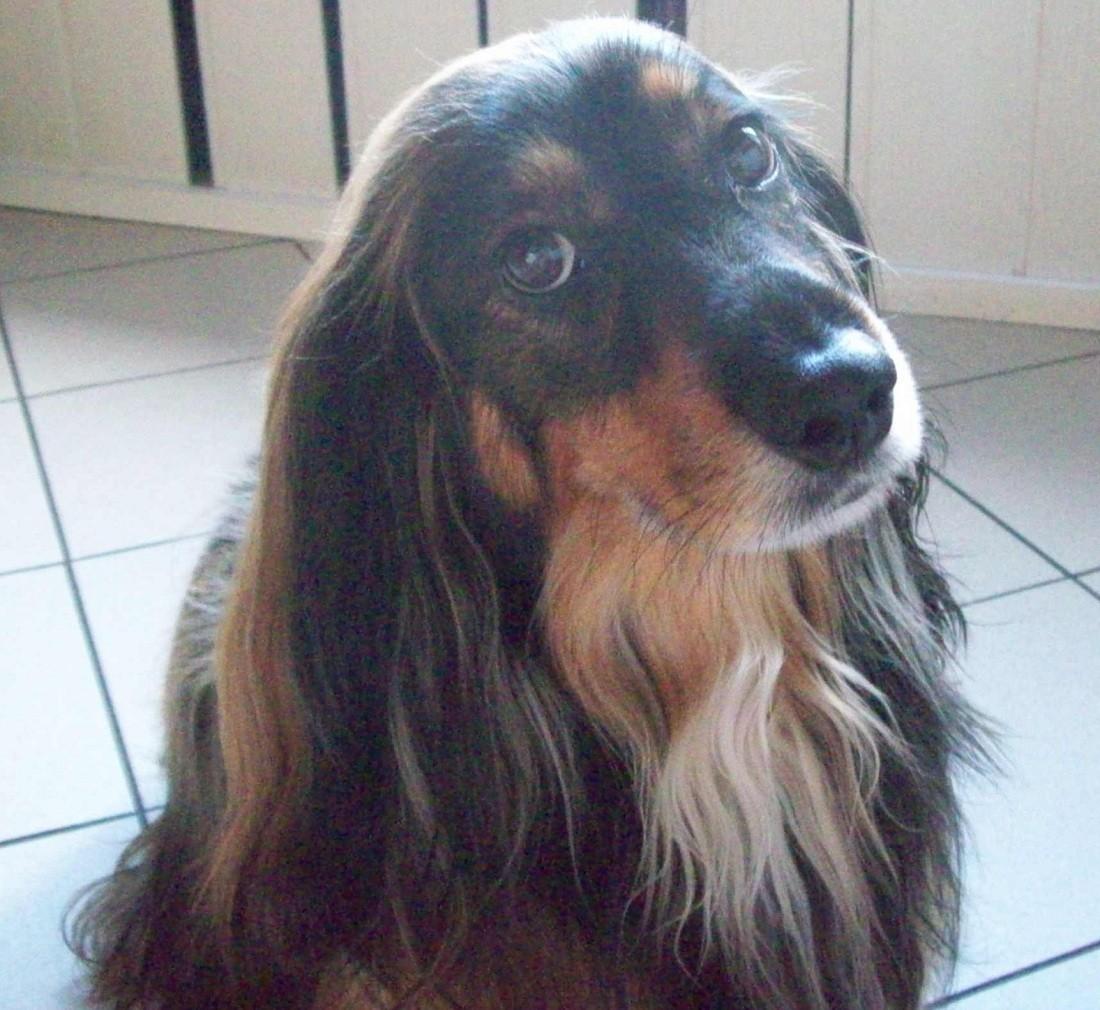 Najsympatyczniejszy Pies Rudy śląskiej Głosuj Koks Właściciel