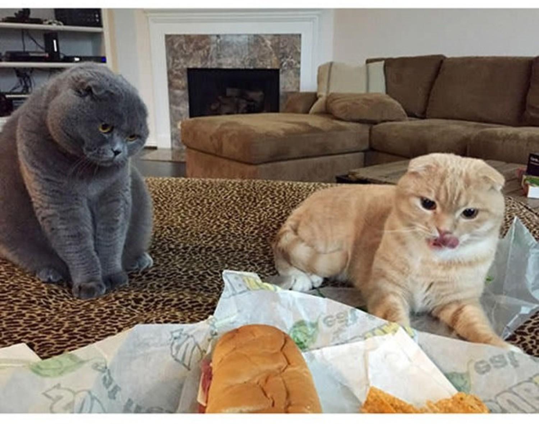 Im nie odmówisz! Musisz ich poczęstować swoim posiłkiem!