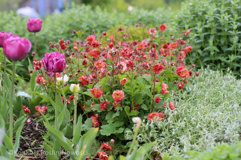 Byliny, krzewy i pnącza - wiele atrakcyjnych roślin i ich odmian pojawia się co roku na polskim rynku