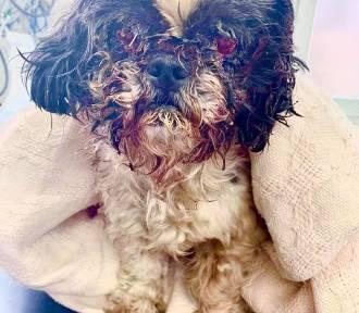 Psa znaleziono w lesie z krwawiącymi oczami. Sąd: oddać do właściciela! [DRASTYCZNE ZDJĘCIA]