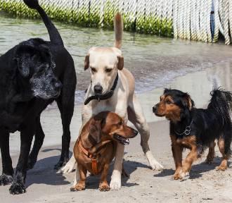 Każdy pies i kot będzie zarejestrowany. Koniec nielegalnych hodowli i handlu bez kontroli