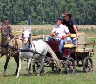 Święto Konia w Stefanowie, gmina Zbąszyń - sobota  24 lipca 2021 -  PROGRAM