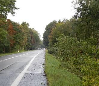 Wycinka kilku tysięcy drzew na drodze krajowej nr 21 Słupsk – Ustka