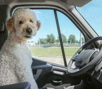 Osoby o tych znakach zodiaku to najgorsi kierowcy. Wagi są wolne jak ślimak!