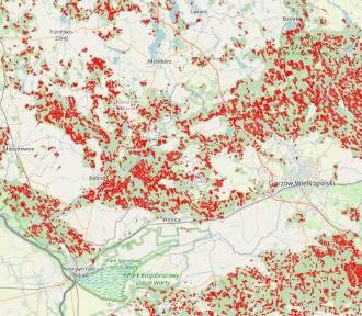 Kontrowersyjna mapa wycinki lasów - zagłada drzew czy manipulacja?