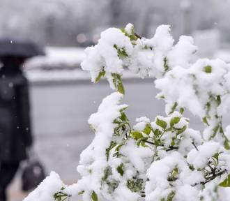 Pogoda w święta? Będzie biało? Sprawdź pogodę na Boże Narodzenie [PROGNOZA IMGW GRUDZIEŃ 2017]
