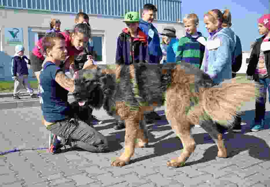 Światowy Dzień Zwierząt w lubelskim schronisku