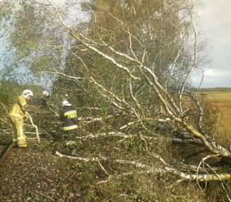 Drzewo na torach. Strażacy OSP Bińcze: Ruch pociągów został wstrzymany