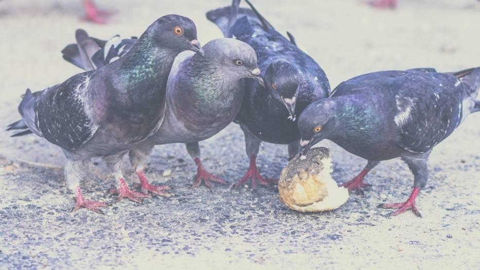 Nie podcinaj ptakom skrzydeł