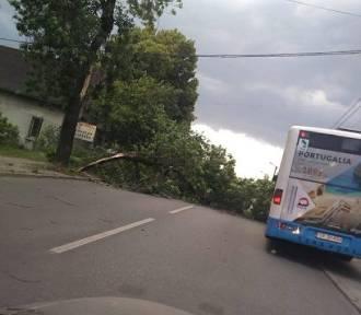 Wichura w Rybniku na Żorskiej przewróciła drzewo!