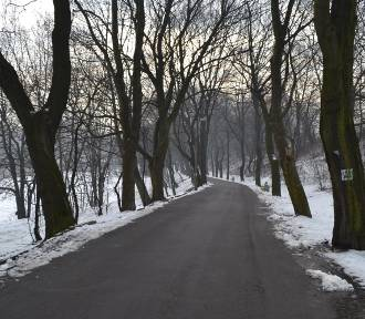 Mysłowice: Park Promenada piękny i pusty zimą