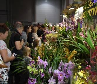 Wystawa roślin owadożernych w hali Expo [ZDJĘCIA]
