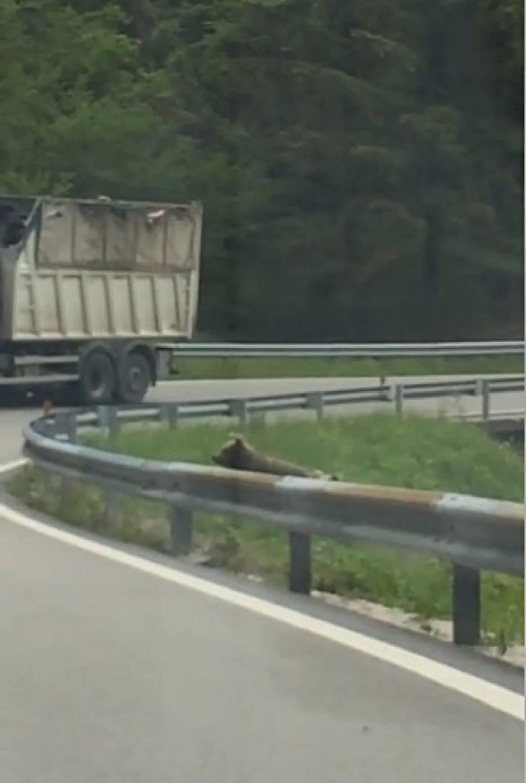Niedźwiedzie Szklarska Poręba