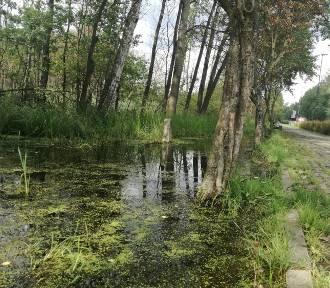 Dolinę Trzech Stawów regularnie zalewa woda. Zlecono odpompowanie wody  ZDJĘCIA