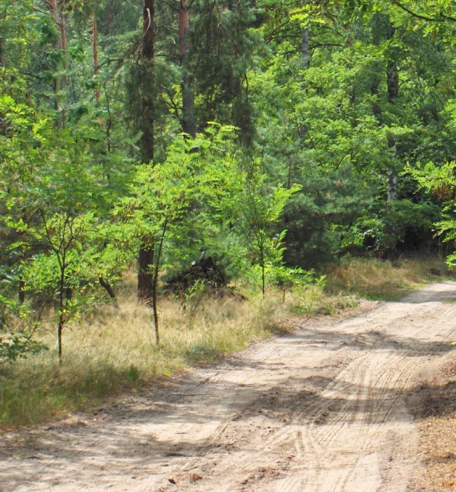 Leśna droga w mazowieckiej wsi Trzcianka