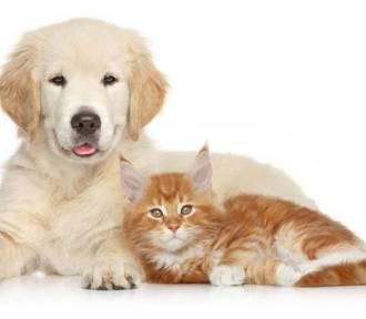 Szukamy psów i kotów do kalendarza - GŁOSOWANIE ROZPOCZĘTE