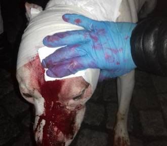 Pies rzucił się na dziecko. Zdesperowany ojciec wbił mu nóż w głowę