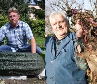 Wyhodowali na działce potwory. Polskie rekordy hodowców warzyw