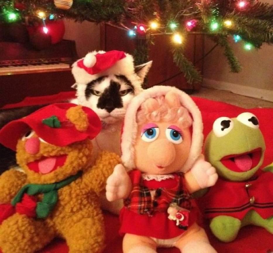 Lubisz Święta? Twój kot nie. Oto zwierzęta, które nienawidzą Bożego Narodzenia