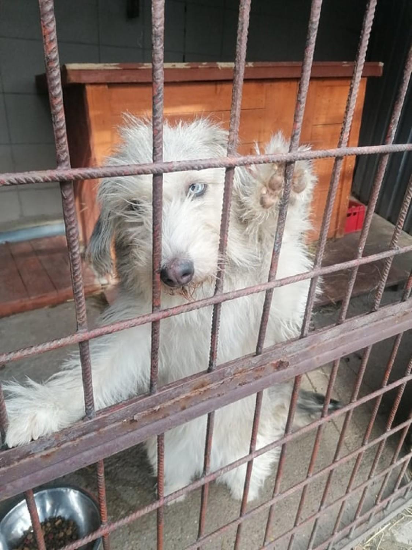 Schronisko w Wałbrzychu  psy do adopcji