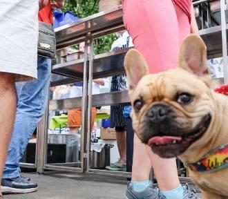 Master Chef 4 Dogs w Poznaniu - tak było!