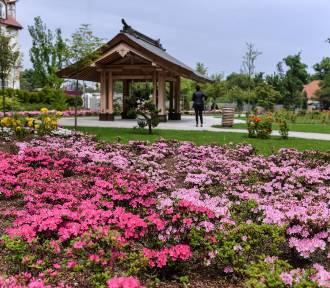 Wiosna w parku oliwskim. Kwitną kwiaty, drzewa i krzewy [zdjęcia]