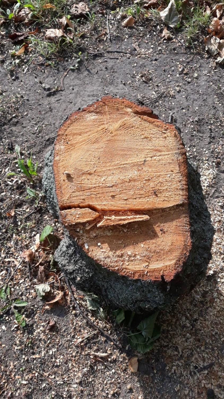 Także inni mieszkańcy Poznania wyrażają swoje zaniepokojenie wycinką drzew w rejonie Ronda Rataje
