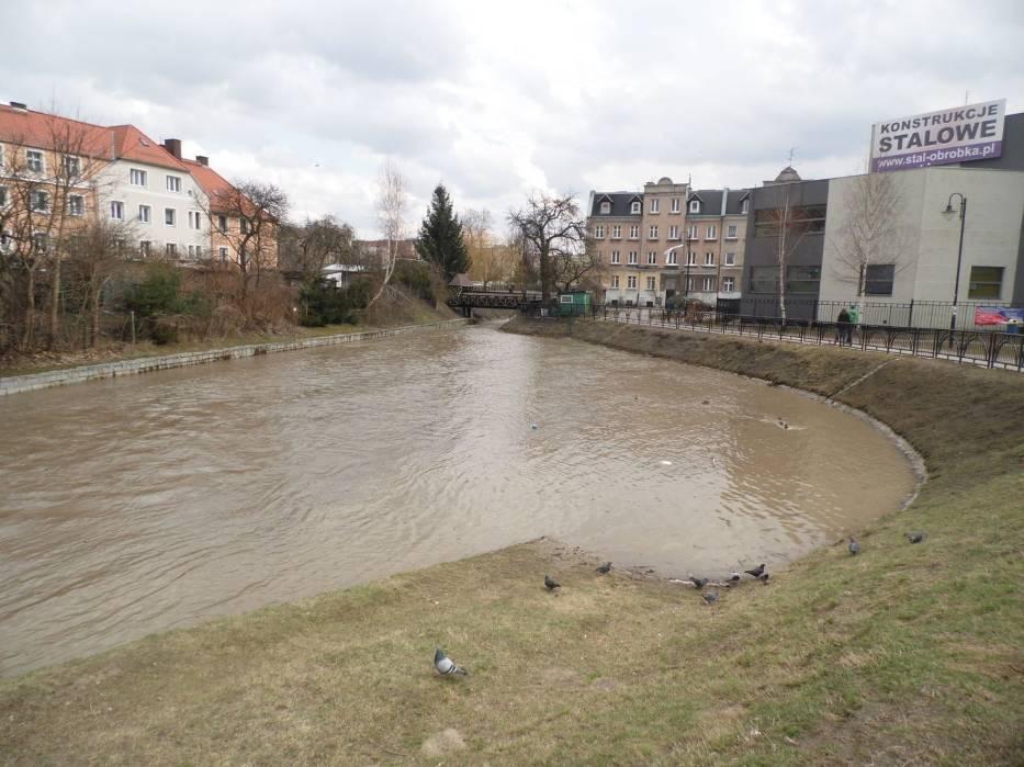 Kaczki opuściły brzegi Kumieli wraz z nadejściem wiosny - na czas lęgu poleciały na jezioro Drużno