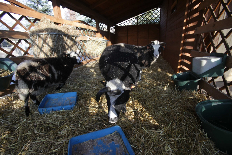 Szopka 2013 zoo w Chorzowie