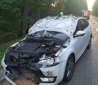 Samochód zderzył się z dzikiem na drodze wojewódzkiej