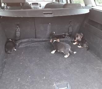 Strażacy ochotnicy uratowali szczeniaki. Porzucone zwierzęta były uwięzione w przepuście drogowym