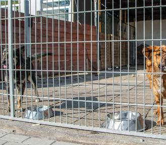 """Zebrano pieniądze na rzecz Schroniska dla Zwierząt w Jastrzębiu w ramach akcji """"Pomagamy jak umiemy"""""""