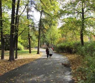 Gdzie wybrać się na spacer w Poznaniu? Oto parki, do których zawitała jesień