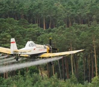 Zakaz wstępu do lasu! Nadleśnictwo przeprowadzi lotniczy zabieg ratowniczy
